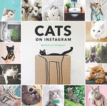 Cats on Instagram.