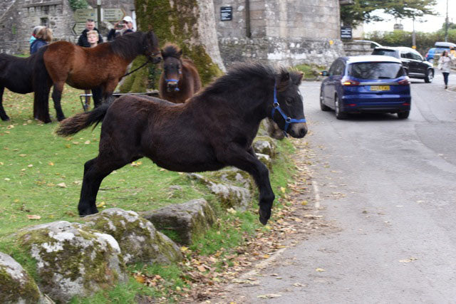 Currently I'm also compiling a photographic book of my Dartmoor pony foals through the seasons.