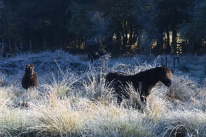 A few beautiful frosty mornings on Dartmoor recently.
