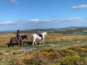 Heather, gorse and ponies on Dartmoor!