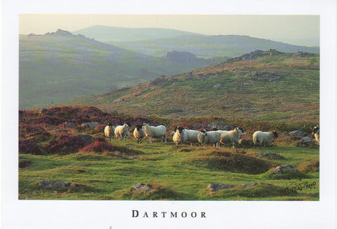 P010 - Moorland Sheep - Postcard - Regular - Pack of 10