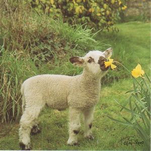 C101 - Spring Lamb - Blank Card - Square