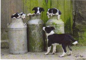 C135 - Milk Churn Collies - Blank Card - Rectangle