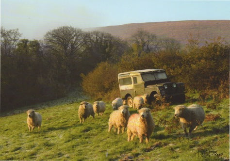 C145 - Landrover Sheep - Blank Card - Rectangle
