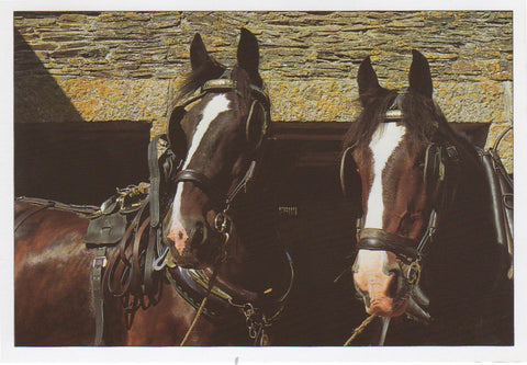 P017 - Workmates - Postcard - Regular - Pack of 10