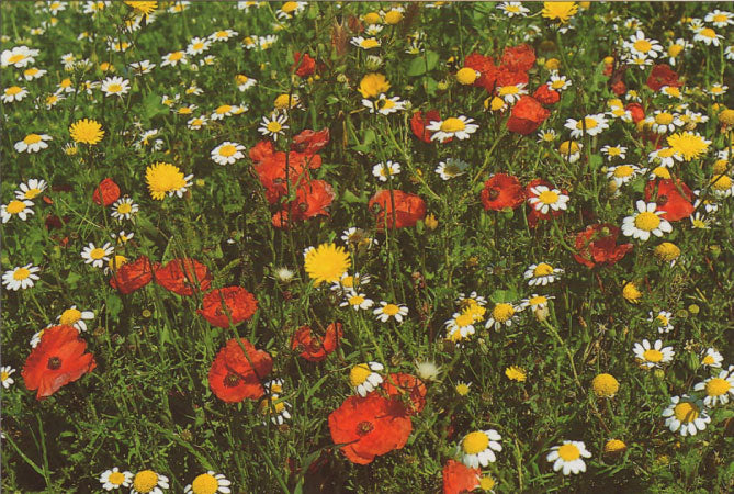 P018 - Meadow Mix - Postcard - Regular - Pack of 10