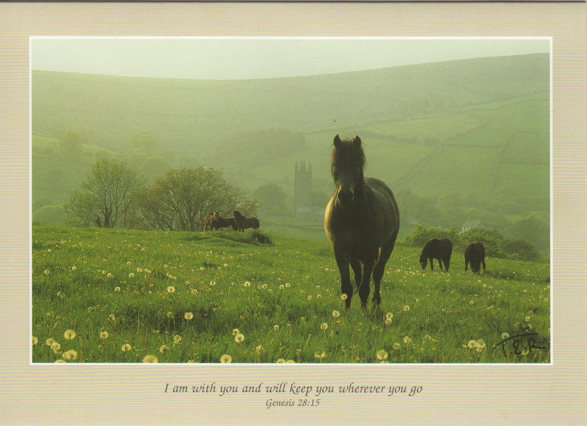 S030 - Dartmoor And Dandelions - Scripture Card - Rectangle