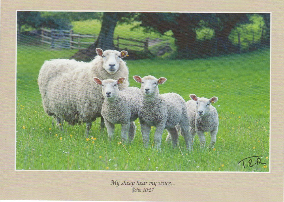 S035 - Ewe Three - Scripture Card - Rectangle