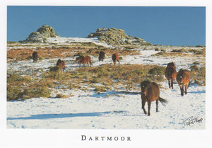 P038 - Dartmoor Ponies in Snow - Postcard - Regular - Pack of 10