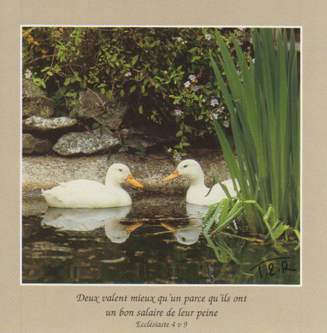 FS040 - Canards - French Scripture Card - Square