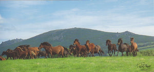 P044 - Pony Gallop - Postcard - Panoramic - Pack of 10