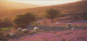 P048 - A Dartmoor Evening - Postcard - Panoramic - Pack of 10