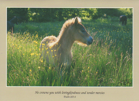 S054 - Pony Halo - Scripture Card - Rectangle