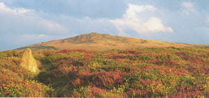 P056 - Rippon Tor - Postcard - Panoramic - Pack of 10