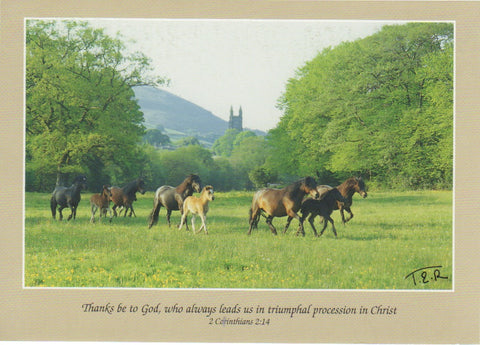 S056 - Ponies in Widecombe Valley - Scripture Card - Rectangle