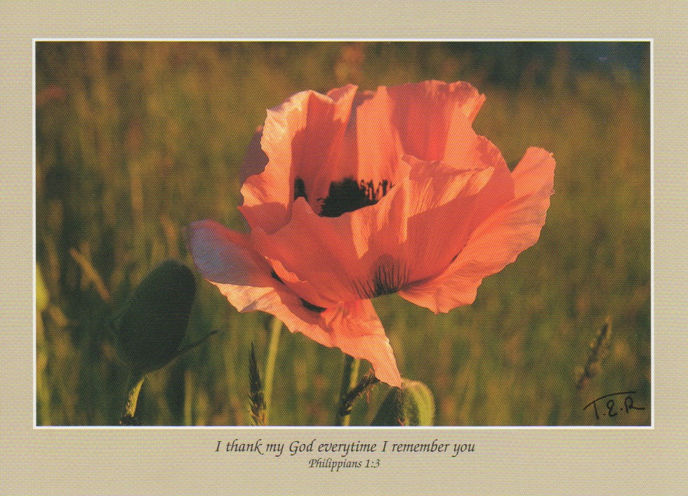 S057 - Pretty Poppy - Scripture Card - Rectangle
