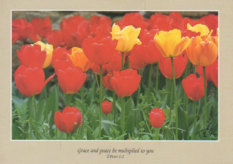 S058 - Tulips - Scripture Card - Rectangle