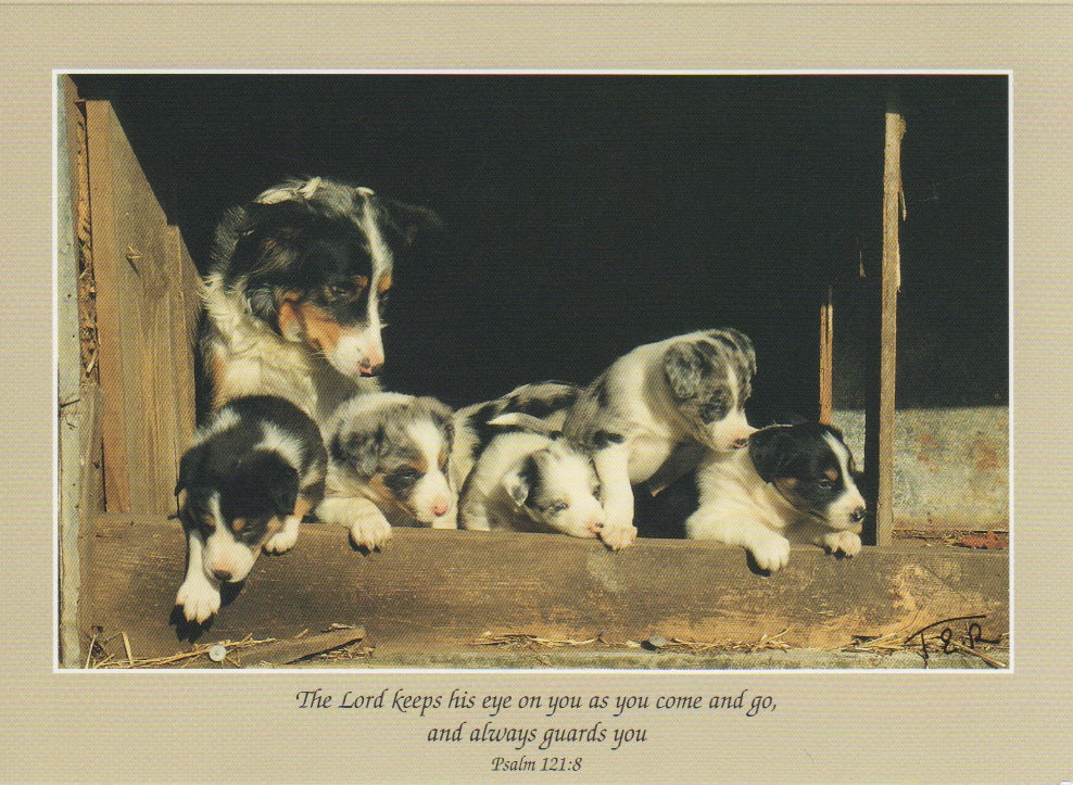 S006 - Puppy Love - Scripture Card - Rectangle