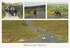 P063 - Dartmoor Traffic - Postcard - Regular - Pack of 10