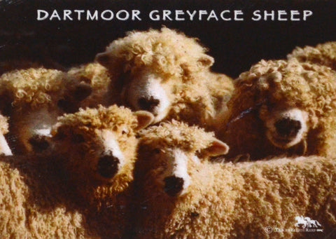 M03 - Greyface Sheep Fridge Magnet