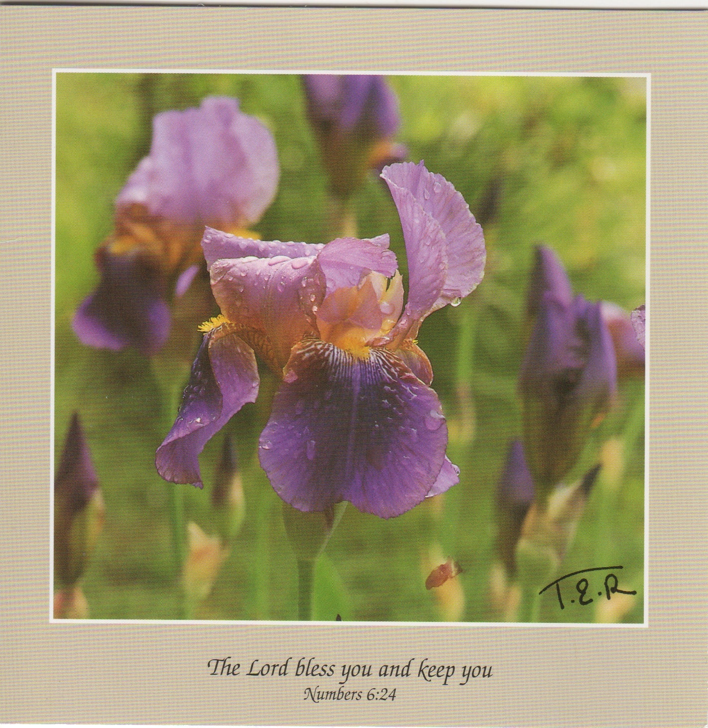 S068 - Iris - Scripture Card - Square