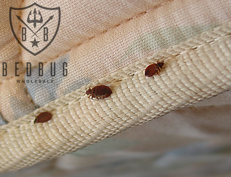 What you must know about Dust Mites, Bed Bugs & Allergens