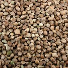 Giant Hempseed - 1kg-Hemp seed-Aldersons-Irish Bait & Tackle