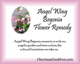 Angel Wing Begonia Flower Essence