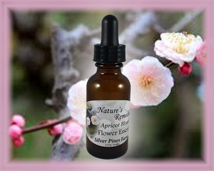 Apricot Blossom Flower Essence - Nature's Remedies
