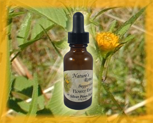 Beggarticks Flower Essence - Nature's Remedies