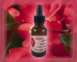 Begonia Flower Essence - Nature's Remedies
