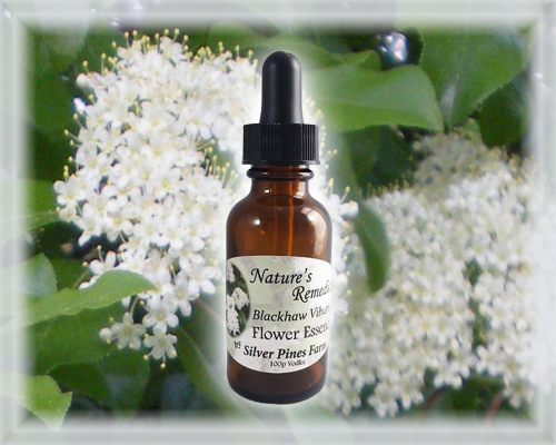 Blackhaw Viburnum Flower Essence - Nature's Remedies