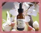 Blackthorn Flower Essence - Nature's Remedies