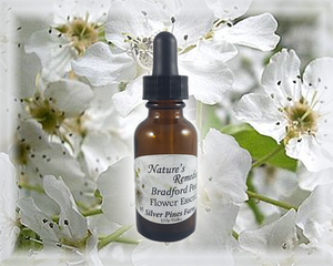 Bradford Pear Flower Essence - Nature's Remedies