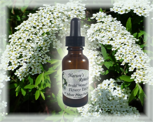 Bridal Wreath Spirea Flower Essence - Nature's Remedies
