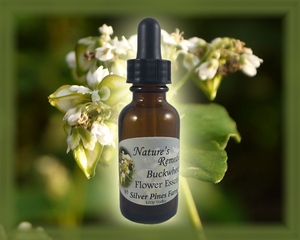 Buckwheat Flower Essence