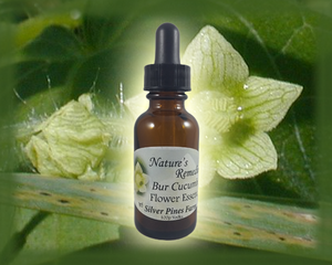 Bur Cucumber Flower Essence - Nature's Remedies
