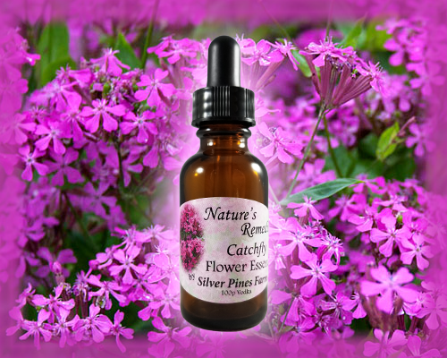 Catchfly Flower Essence - Nature's Remedies