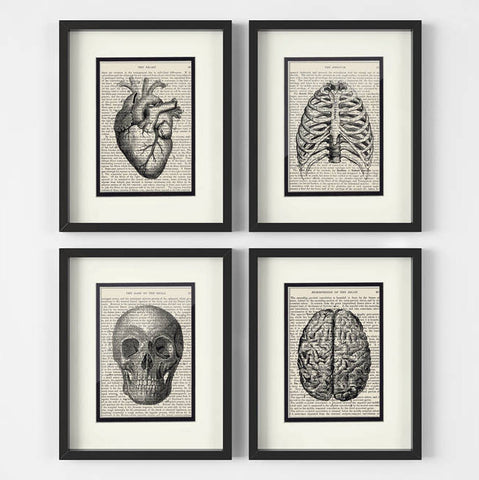 Anatomy Collection (Set of 4)