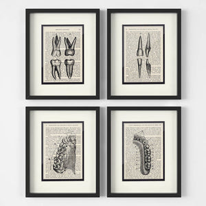 Dental Collection (Set of 4)