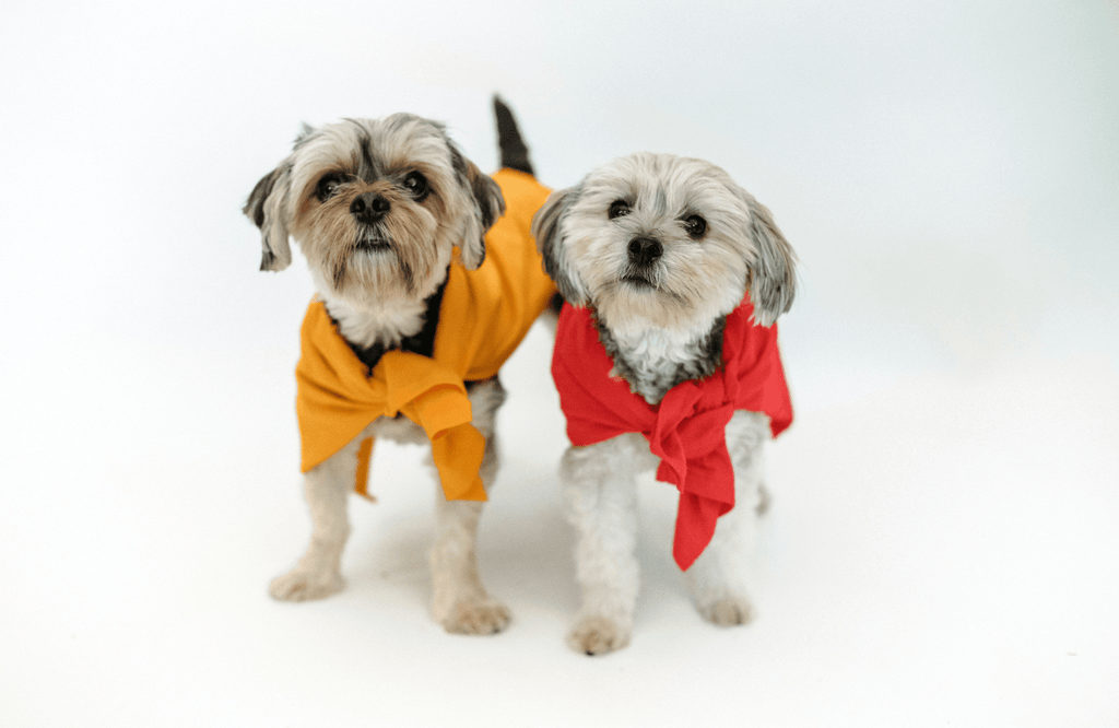 Two dogs in coats standing next to each other