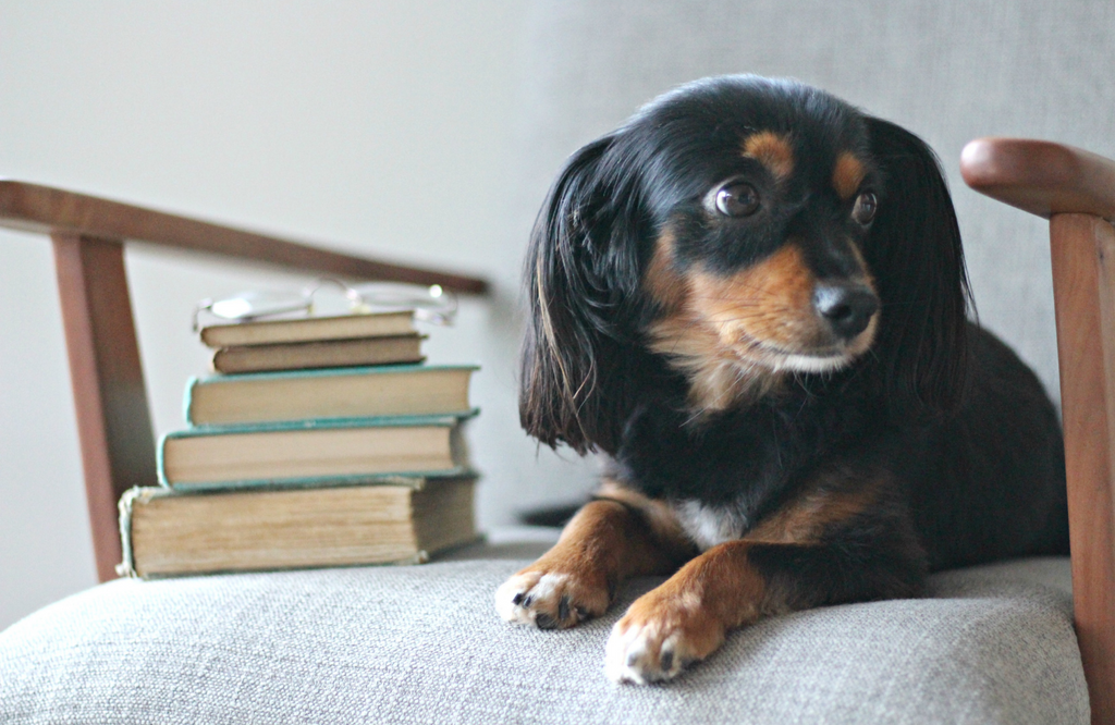 Dog sitting next to pile of books
