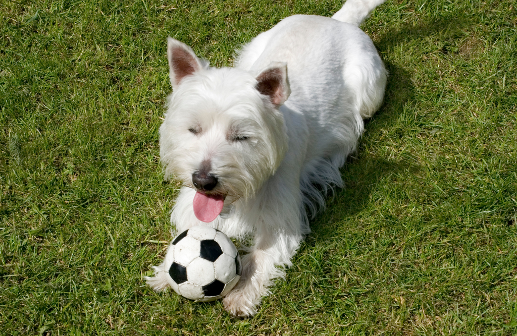Pup with soccer ball