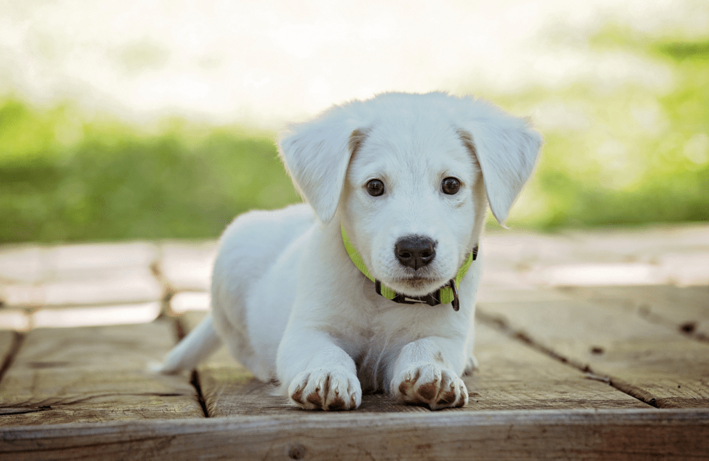 Small puppy on walkway