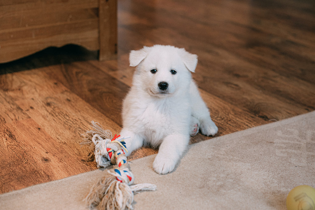 Puppy with Chew Toy