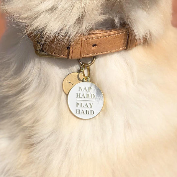 Pet ID tag hanging on a collar worn by a blonde dog. It is made of gold plated brass and white enamel that reads 'Nap Hard, Play Hard'.