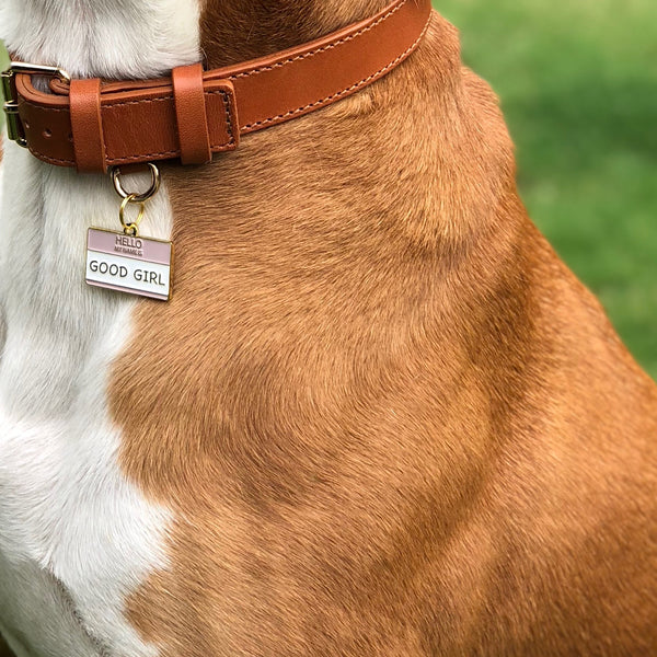 Pet ID tag hanging on a collar worn by a brown and white dog. Made of gold plated brass and pink and white enamel and read 'Hello, My Name is Good Girl'.