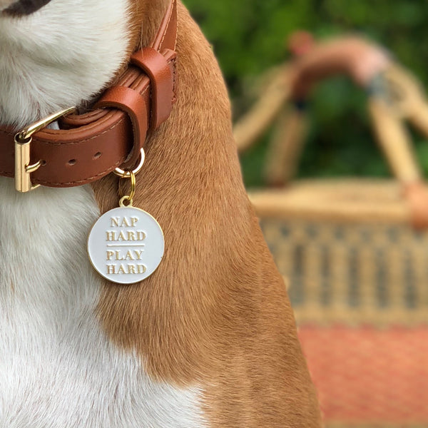 Pet ID tag hanging on a collar worn by a brown and white dog. It is made of gold plated brass and white enamel that reads 'Nap Hard, Play Hard'.