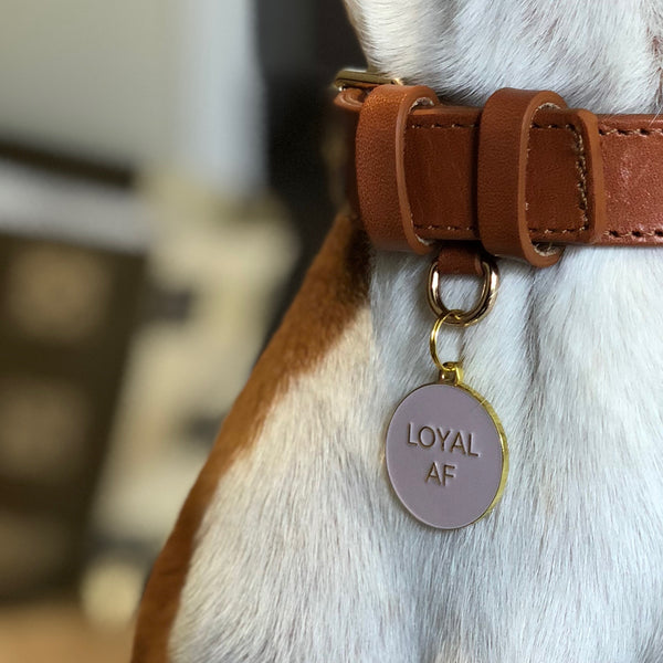 Pet ID tag hanging on a collar worn by a brown and white dog. It is made of gold plated brass and pink enamel that read 'Loyal AF'.