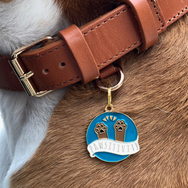 Pet ID tag hanging on a collar worn by a brown and white dog. It is made of gold plated brass and turquoise enamel that read 'Paw-sitivity' and depicts paws praising to the heavens.